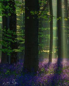 Spring Scene, Belgium, Serenity
