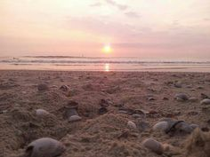 Sunset over the lovely island of Texel.  Photo by M. Driehuis-Olsder