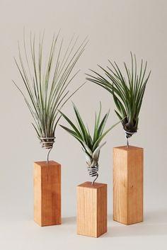 EVRGREEN: Lebendige Pflanzenbilder für die eigenen vier Wände  Pflanzen machen eine Wohnung sofort wohnlicher und dienen zudem als lebendige Raumluftfilter. Selbst Menschen ohne grünen Daumen können sich mit d...
