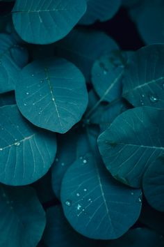 Green | Pinterest: Natalia Escaño