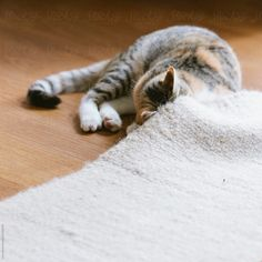 Like A Cat, Carpet, The Unit, Cute, Animals, Tips, Kitty Cat Pictures, Gatos, Animales
