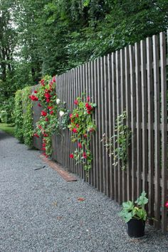 Screen Plants, Fence Gate, Fences, Plank, Dream Garden, Backyard Landscaping, Garden Inspiration, The Great Outdoors, Interior And Exterior