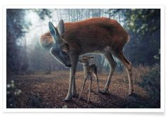 Mother And Fawn - John Wilhelm en Affiche premium par 1x | JUNIQE