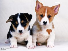 love dogs - Worth1000 Contests