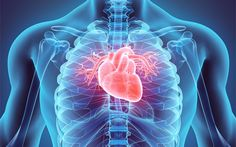 Can Marijuana Use Weaken Your Heart Muscles? https://www.marijuanatimes.org/can-marijuana-use-weaken-your-heart-muscles?utm_source=rss&utm_medium=Friendly+Connect&utm_campaign=RSS @marijuanatimesX #cannabis