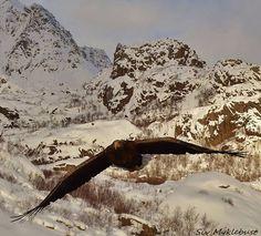 Øyhellsund Lofoten, Mount Everest, Earth, Mountains, Places, Nature, Travel, Naturaleza, Viajes