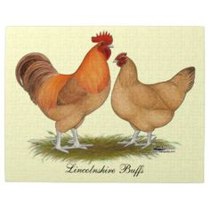 Search for customizable Rooster posters & photo prints from Zazzle. Buff Chicken, Poultry Breeds, Mystery Plays, Poster Prints, Art Prints, Rooster, Jigsaw Puzzles, Lincoln, Decoupage