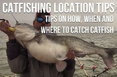 How when and where to catch catfish in the Ultimate List of Catfishing Tips. How when and where to catch catfish in the Ultimate List of Catfishing Tips. Big Catfish, Catfish Bait, Catfish Fishing, Bass Fishing Tips, Fishing Knots, Gone Fishing, Best Fishing, Kayak Fishing, Fishing Tricks