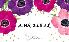 Anemones by Star Studios on Creative Market