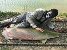 Latest Arapaima fishing news from Thailand April 2017