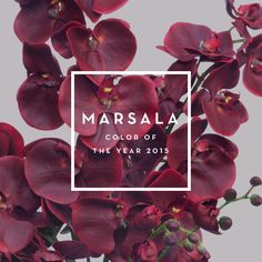Marsala. Color of Th