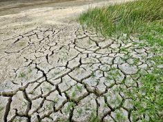 pantano, sequía, escasez, hierba, tierra, grietas, 1708280842