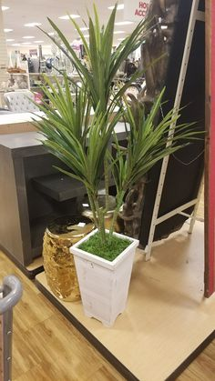 Home Goods John Laurie, Home Goods, Plants, Plant, Planets