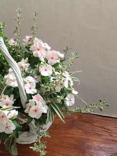 planteさんが投稿した画像です。他のplanteさんの画像も見てませんか? おすすめの観葉植物や花の名前、ガーデニング雑貨が見つかる!GreenSnap(グリーンスナップ)