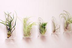 Medium Air Plant and Glass Vase // Wedding Favor Decor Gift Wall-Mounted Floating Terrarium DIY Minimalist Garden tillandsia. $15.00, via Etsy.