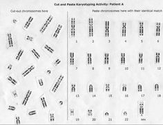 Chromosome, Mitosis, and Karyotype Analysis worksheet ...
