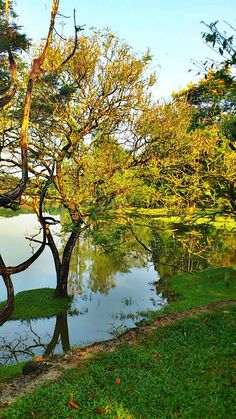 Taiping, Perak, Malaysia. Taiping, Ipoh, World Pictures, Holiday Destinations, Where To Go, Great Places, New Experience, Scenery, Places To Visit