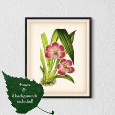 Botanical print Orchid Instant download by RestoredBotanicalArt