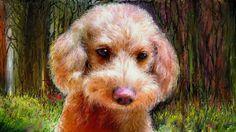 PCペイントで絵を描きました! Art picture by Seizi.N:   愛犬ティアモの絵をまた描きました昨日描いた3枚目です、親(犬)バカでしょうか可愛いです。  Adriana Calcanhoto - Sou eu assim sem você (animado) http://youtu.be/--0pWDMoWDE