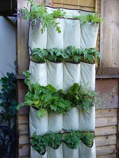 Shoe hanger planter