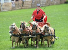 Photos of the day - July 23, 2014. A Roman dyad carriage with four Mini Shetland Ponys participates in a race at the horse fair 'Eurocheval' in Offenburg, Germany, 23 July 2014. The Eurocheval is one of the biggest horse fairs in Europe, according to the organizer. (EPA/PATRICK SEEGER)