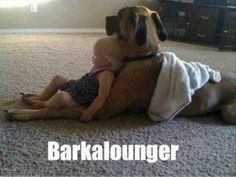 funny pictures dog and little girl