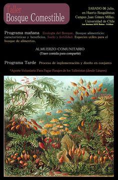 Taller Bosque Comestible / Sabado 06 de Julio / Huerto Rengalentun. Campus Juan Gomez Millas, Universidad de Chile, Santiago. ~ Bosques frutales o Food forest.