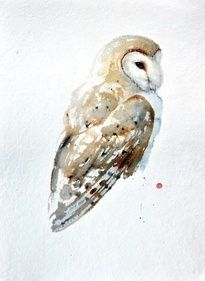 Tattoo Bird Watercolor Barn Owls 15 New Ideas Watercolor Barns, Owl Watercolor, Watercolor Animals, Tyto Alba, Owl Quilts, Art Aquarelle, Watercolor Painting Techniques, Bird Artwork, Beautiful Owl