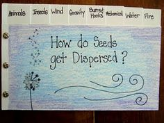Tab Booklet ~ How do Seeds get Dispersed? for older kids but could be adapted to K/1 Follow the site for more ideas