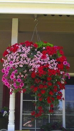 Using Hanging Flower Basket Ideas is a very good option if you want to make your home more appealing. Petunia Hanging Baskets, Plants For Hanging Baskets, Hanging Flowers, Hanging Planters, Amazing Flowers, Beautiful Flowers, Fall Containers, Plant Design, Fall Flowers