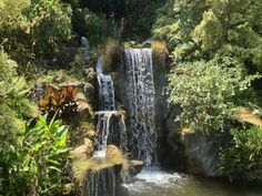 THINGS TO SEE IN CALIFORNIA: Los Angeles County Arboretum and Botanic Garden in Arcadia, CA