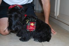 Angus dressed for Halloween