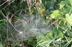 Spinnennetz im #Herbst - Willkommen Altweibersommer in #Bayern bei #München
