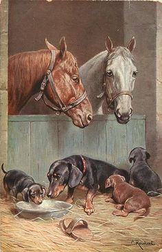 white and  brown horses look over stable door at mother dachshund and three pups