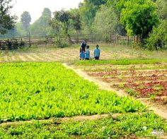 Organic #farming practices reduce #pollution, conserve water, reduce soil #erosion, increase soil fertility, and use less #energy. #organic