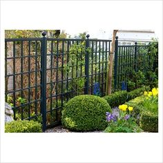 GAP Photos - Garden & Plant Picture Library - Clipped Buxus - Box ball backed by black painted trellis - GAP Photos - Specialising in horticultural photography