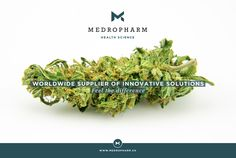 It is our pleasure to present you two new hemp-strains, which exhibit no psycho-active effects. This is ensured by a high cannabidiol (CBD) content with only trace amounts of tetrahydrocannabinol (Δ9-THC <0.8%). As pioneers regarding the introduction of medicinal cannabis into medical therapies, it is our main focus to guarantee an uncomplicated and reliable treatment to patients suffering from various afflictions. #thc #medicalcannabis #cannabidiol #cbd #marijuana #medicalmarijuana Medical Cannabis, Exhibit, Hemp, Content, Oil, Butter
