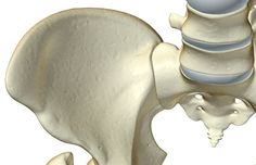 Sacroiliac joint seen from above.