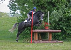 "Cooley Blue - Upper Level Prospect  6 year old, 16.1 Irish Sporthorse gelding. Imported from Ireland in fall of 2012 through Richard Sheane of Cooley Sport Horses. ""Oliver"" has completed 8 Training level events and has never had a XC penalty!"