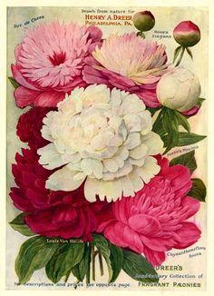 An Homage to Powelton Gardeners Vintage Diy, Vintage Labels, Vintage Cards, Vintage Paper, Vintage Postcards, Vintage Images, Vintage Ephemera, Botanical Illustration, Botanical Prints