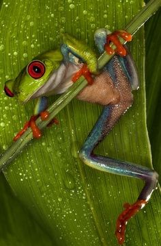 strange frogs :) www.dogsnaturalwater.com