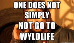 one does not guy