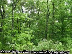 Vacant Lot/Land for sale near Rickman Elementary School in Cookeville TN http://ift.tt/1N2jHkO  Victoria Carmack - First Realty - 116 S Lowe Cookeville TN 38501 - (931) 528-1573x 2234  Vacant Lot/Land for sale near Rickman Elementary School in Cookeville TN http://ift.tt/NWjlQH Nice wooded lot with 5.2 acres ready to build your ideal home on. This parcel has that nice country feel and still in a desirable neighborhood. Here is your chance to make your dream home in the The Overlook and have…