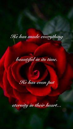 Inspirational Scriptures, Bible Scriptures, Coming Up Roses, Everlasting Life, Jehovah's Witnesses, My Best Friend, Psalms, Jesus Christ, Mindset
