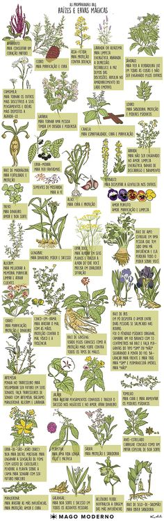 Diabetes Food List - - - Diabetes Education Tips - - Diabetes Desserts Fall Wiccan, Magick, Witchcraft, Medicinal Herbs, Book Of Shadows, Flower Power, Planting Flowers, Herbalism, Green