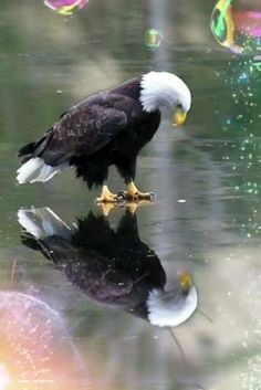 Birds Of Prey, Wild Life, Giant Eagle, Ice Art, Cool Landscapes, Great Pictures, Eagle Pictures, Surprise Pictures, Beautiful Pictures