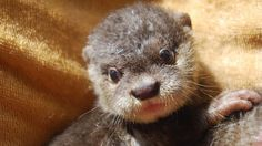 Petition · Save the otters and other wildlife in Turtle Bay · Change.org