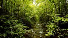 Green Path [1920x1080]