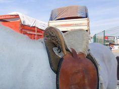Hungarian Saddle