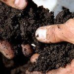 Vysoký záhon se zakládá jako kompost. Zelenina na něm roste výtečně! - Užitková zahrada Fruit, Blog, Gardens, Advice, Composters